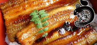 「土用の丑の日」のスタミナ食「ウナギ」と成分を比べてみました!