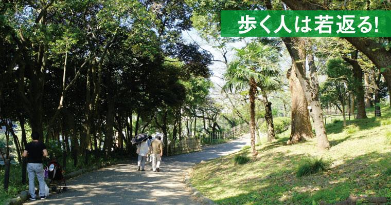 飛鳥山公園から歩く「王子周辺散策」~12月には「熊手市」や「王子狐の行列」も